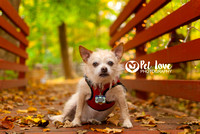 Mr. Bojangles | Project 52 Week 2: Consider Your Vision | Cincinnati & San Francisco Dog Photographer
