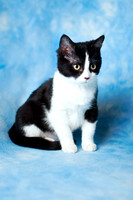 Reebok | Black & White Kitten | Cincinnati & San Francisco Cat Photographer