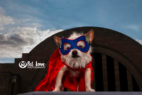 Wonder Dog at the Hall of Justice | Project 52 Week 2: Consider Your Vision | Cincinnati & San Francisco Dog Photographer