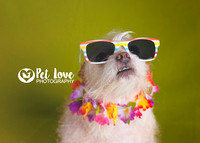 Tropical Pup | Project 52 Week 2: Consider Your Vision | Cincinnati & San Francisco Pet Photography