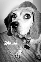Soulful Hound | Project 52 Week 2: Consider Your Vision | Cincinnati & Bay Area Pet Photographer