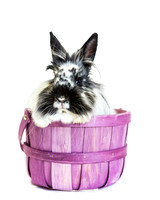 Finch | Lionhead Rabbit | Rescue Rabbit