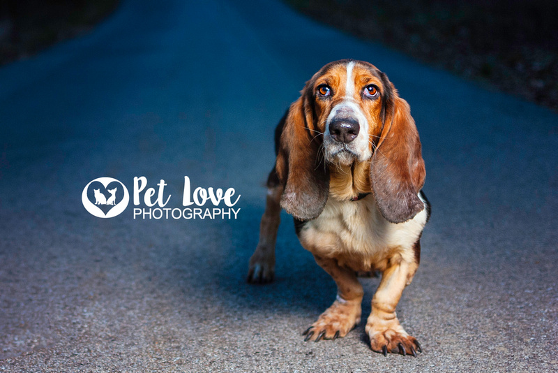 Molly the Basset | Project 52 Week 2: Consider Your Vision | Cincinnati & San Francisco Dog Photographer