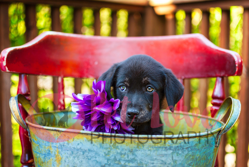 Stormfly | Lab Mix | Cincinnati & San Francisco Dog Photographer
