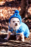 Mr. Bojangles in Hat | Project 52 Week 1: New | Cincinnati and San Francisco Dog Photographer