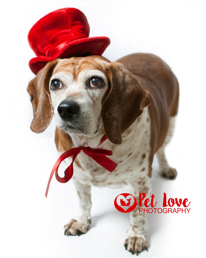 Red Hat Society Dog, Stella the Bagle